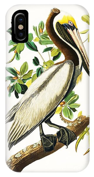 Audubon iPhone X Case - Brown Pelican by Pg Reproductions