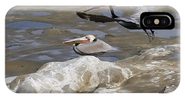 Brown Pelicans At La Jolla Cove IPhone Case