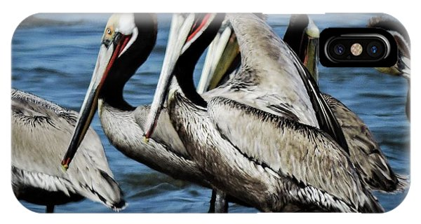 Brown Pelicans Preening IPhone Case