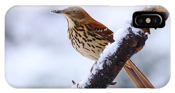 Brown Thrasher In Snow IPhone Case