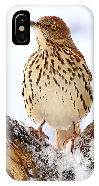 Brown Thrasher With Snow  IPhone Case