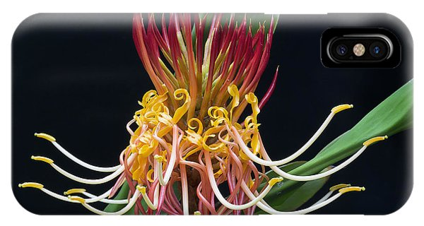 Brownea Macrophylla Tropical Flower IPhone Case