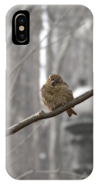Bryant Park Bird Nyc IPhone Case