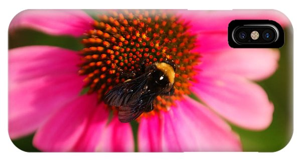 Little Things iPhone Case - Bumble On A Pistil by Jeff Swan