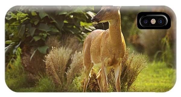 IPhone Case featuring the photograph Buck by Angel Cher