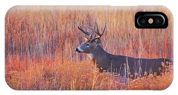IPhone Case featuring the photograph Buck Deer In Morning Sunlight by John De Bord