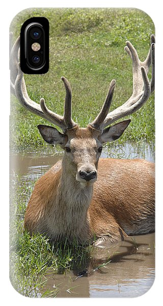 Buck Phone Case by Keith Lovejoy