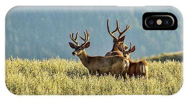 Buck Mule Deer In Velvet IPhone Case