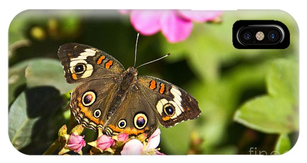 iPhone Case - Buckeye Butterfly by Kelly Holm