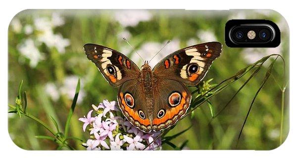 Buckeye Butterfly Posing IPhone Case