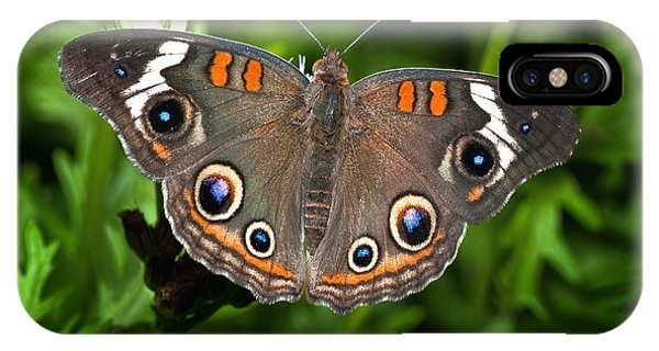 Buckeye Butterfly IPhone Case