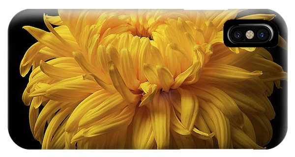 Bud Opening-chrysanthemum 'allison Peace IPhone Case