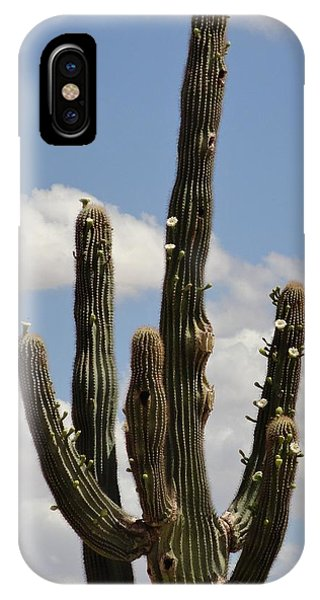 Budding Saguaro Cactus Babies IPhone Case