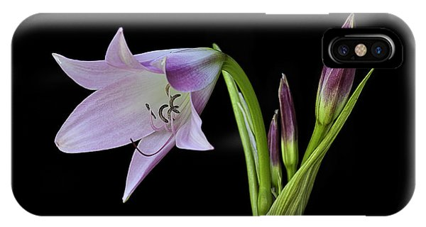 Budding Lily IPhone Case
