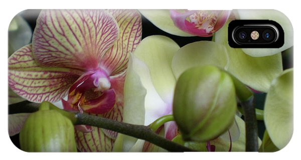 Budding Orchids  IPhone Case