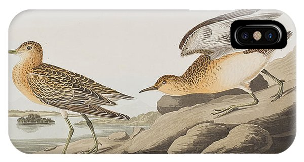 Sandpiper iPhone Case - Buff Breasted Sandpiper by John James Audubon