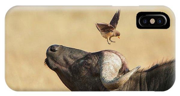 Buffalo And Oxpecker Bird IPhone Case