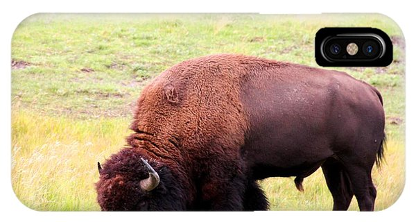 Buffalo Roaming IPhone Case