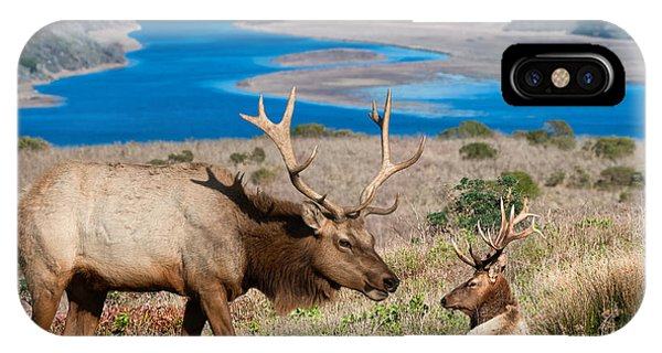 Bull Elk Above Tomales Bay IPhone Case