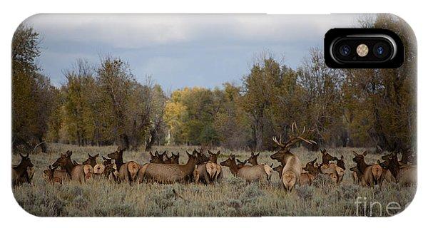 Bull Elk And Harem IPhone Case