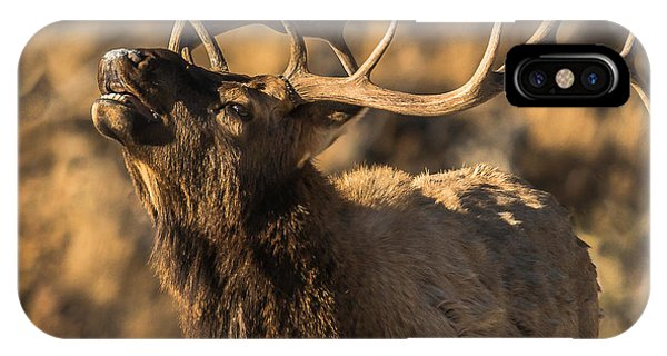 Bull Elk Bugle In Fall IPhone Case
