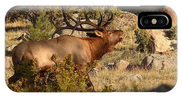 Bull Elk Bugling Among The Rocks Phone Case by Max Allen