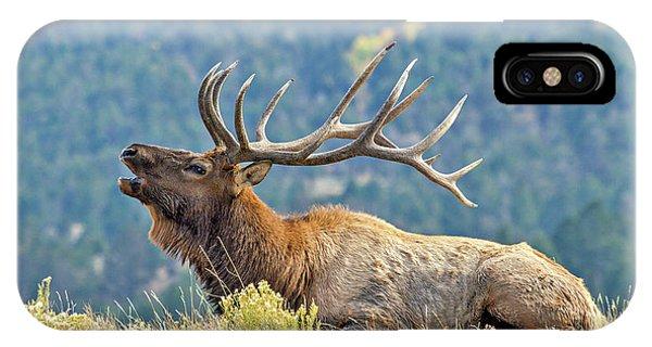 Bull Elk Bugling IPhone Case