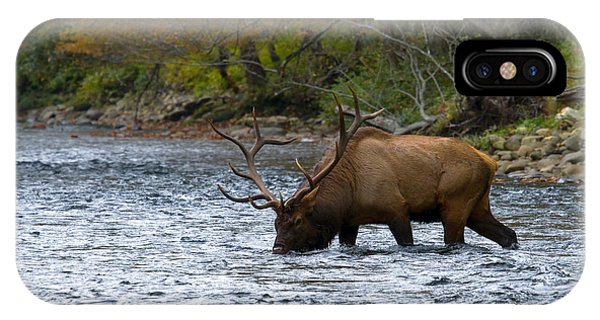 Bull Elk Crossing The River IPhone Case
