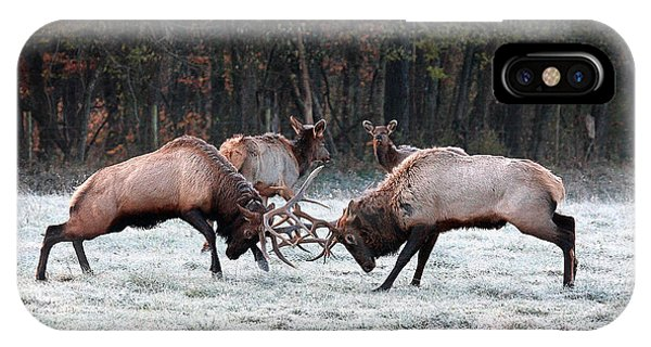 Bull Elk Fighting In Boxley Valley IPhone Case