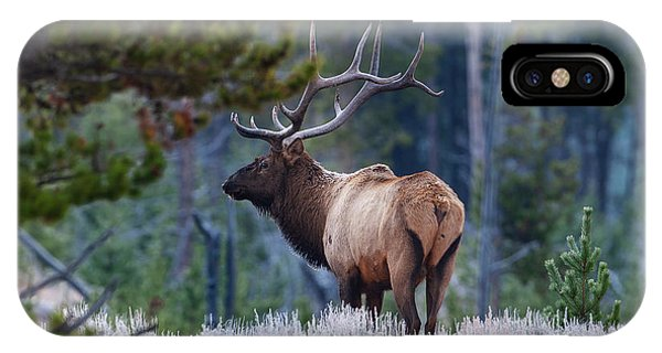 Bull Elk In Forest IPhone Case