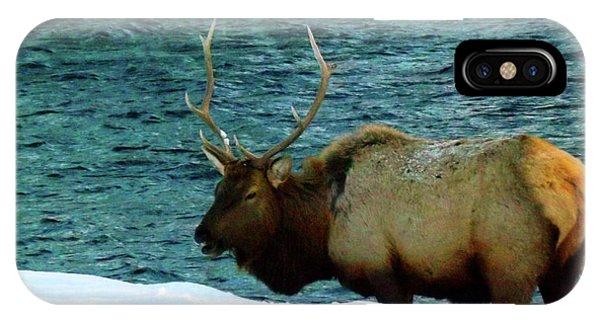 Bull Elk In Winter IPhone Case