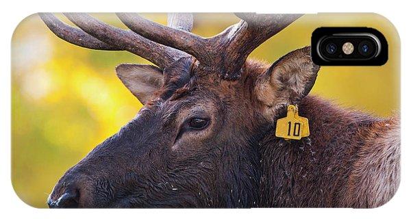 Bull Elk Number 10 IPhone Case