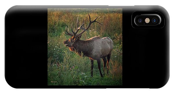 Bull Elk IPhone Case