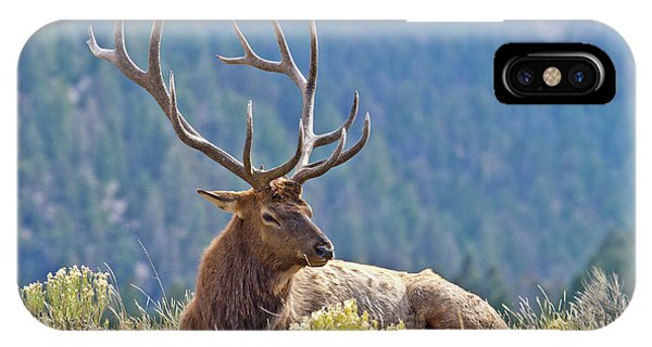 Bull Elk Resting IPhone Case