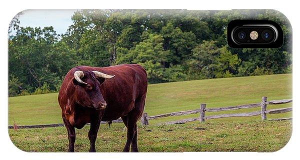 Bull In Field IPhone Case