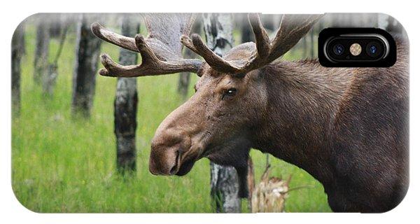Bull Moose Portrait IPhone Case
