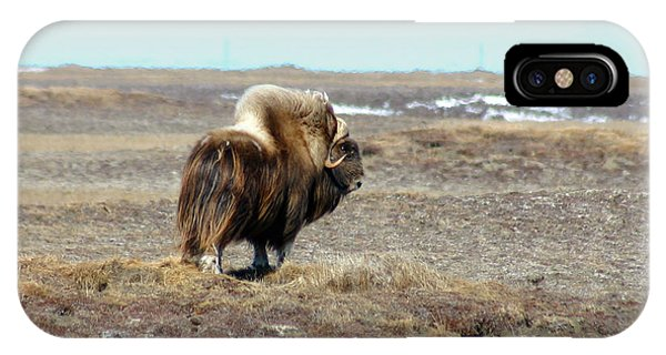 Bull Musk Ox IPhone Case