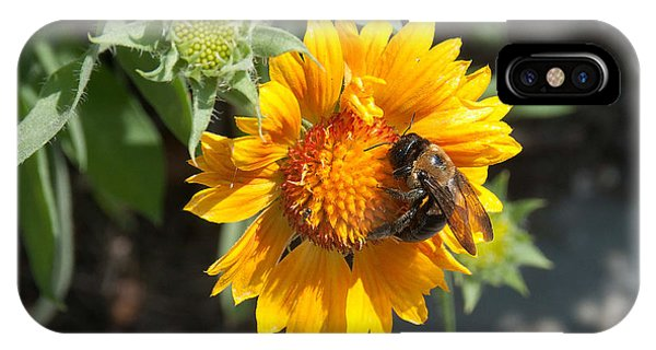 Bumble Bee Collecting Pollen On Sunflower IPhone Case