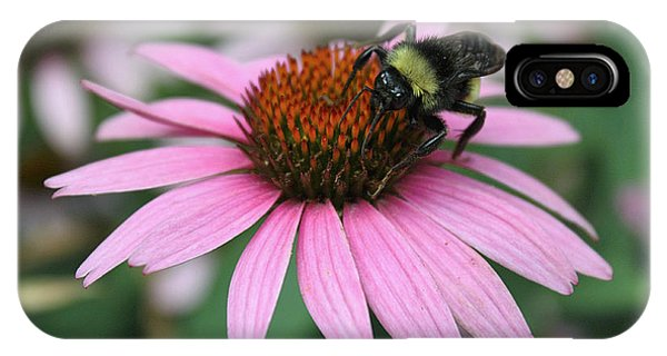 Bumble Bee On Pink Coneflower IPhone Case