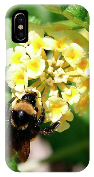 Bumble Bee On Yellow Flowers IPhone Case