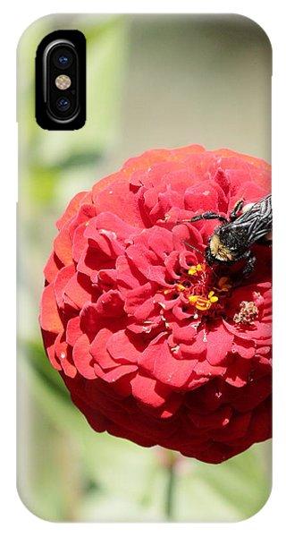 Bumble Bee On Zinnia IPhone Case