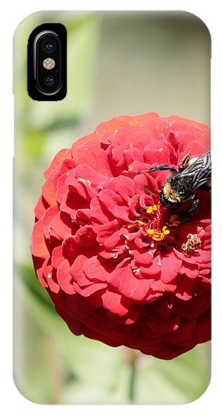 Bumble Bee On Zinnia IPhone Case