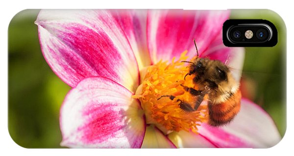 Bumble Bee Pollination IPhone Case