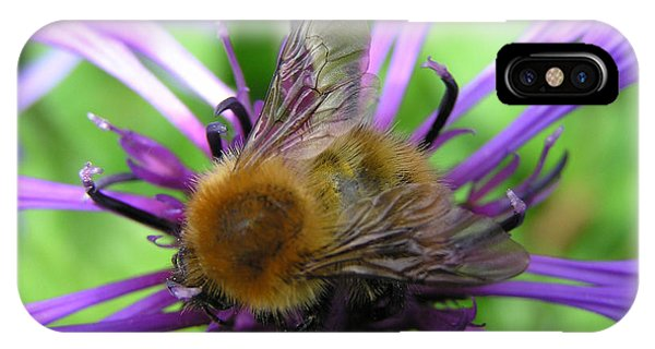 Bumblebee In Blue IPhone Case