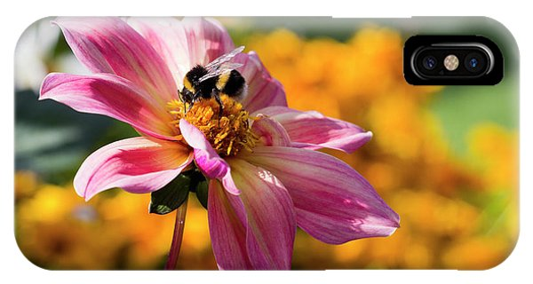 IPhone Case featuring the photograph Bumblebee On Orange by Helga Novelli