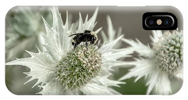 Bumblebee On Thistle Flower IPhone Case