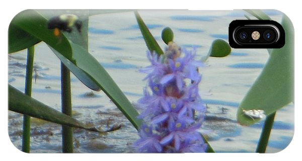 Bumblebee Pickerelweed Moth IPhone Case