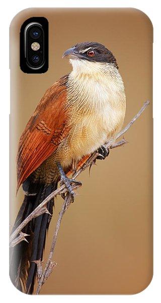 Colorful Bird iPhone Case - Burchell's Coucal - Rainbird by Johan Swanepoel
