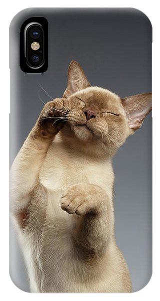Burma Cat Paws Snout Covers On Gray IPhone Case
