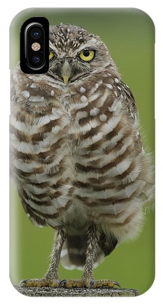 Burrowing Owl Lookout IPhone Case
